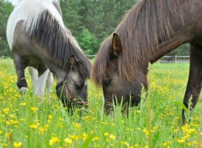 Eläinavusteinen terapia